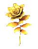 金のバラ(ローズゴールド)